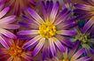 古典花卉底纹