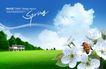景物静物0119,景物静物,韩国花纹Ⅲ,蜜蜂  花朵 白云