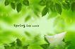 景物静物0165,景物静物,韩国花纹Ⅲ,绿叶 小船 影子