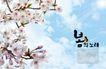 景物静物0170,景物静物,韩国花纹Ⅲ,樱花 风和日丽 蓝天白云