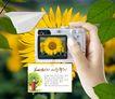 生活手姿0036,生活手姿,韩国花纹Ⅲ,数码相机 向日葵 纸飞机
