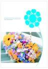 花卉0004,花卉,版式设计,各种 花色 揉合