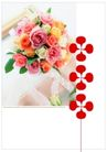 花卉0005,花卉,版式设计,玫瑰 恋情 表示