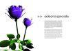花卉0016,花卉,版式设计,花卉构图
