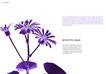 花卉0017,花卉,版式设计,紫色小花
