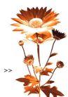 花卉0019,花卉,版式设计,金色插画