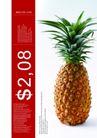餐饮0147,餐饮,版式设计,水果 物价 展示