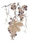 竹子荷花植物0015,竹子荷花植物,节日喜庆,葡萄 结果 成熟