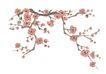 竹子荷花植物0017,竹子荷花植物,节日喜庆,花苞 冬天 冬日