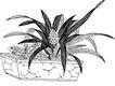 竹子荷花植物0034,竹子荷花植物,节日喜庆,方形花盘 长长的叶子 果实