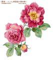 单朵艳丽配色花纹0002,单朵艳丽配色花纹,人物,绽放 鲜红 花枝