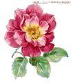 单朵艳丽配色花纹0008,单朵艳丽配色花纹,人物,单朵 艳丽 鲜花