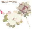 单朵艳丽配色花纹0015,单朵艳丽配色花纹,人物,牡丹花 白花瓣