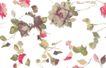 单朵艳丽配色花纹0041,单朵艳丽配色花纹,人物,花样 图案 碎片