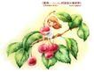卡通儿童女孩与花0015,卡通儿童女孩与花,人物,水果 苹果 树枝