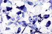墨色精品花纹0038,墨色精品花纹,人物,印花 淡紫色 树叶素描