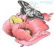 水彩背景及其花纹0071,水彩背景及其花纹,人物,水彩世界 水彩红花 黑蝴蝶