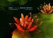 水彩背景及其花纹0087,水彩背景及其花纹,人物,红花 水彩 花瓣