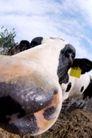 农场动物表情0012,农场动物表情,农业,耳朵 垂挂 篇号