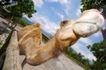 农场动物表情0018,农场动物表情,农业,骆驼 翘起 头部