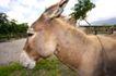 农场动物表情0025,农场动物表情,农业,