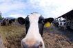 农场动物表情0036,农场动物表情,农业,