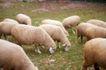 农场动物表情0055,农场动物表情,农业,