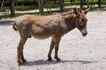农场动物表情0059,农场动物表情,农业,驴子 牲口 影子