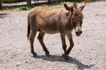 农场动物表情0064,农场动物表情,农业,动物 沙漠 寻找