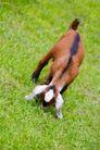 农场动物表情0065,农场动物表情,农业,草地 动物 寻找