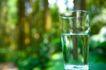 大自然环保0049,大自然环保,植物,玻璃杯 水杯 杯子