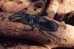 大自然环保0058,大自然环保,植物,昆虫 自然界 岩石