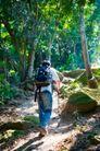 大自然环保0067,大自然环保,植物,