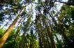 大自然环保0073,大自然环保,植物,仰视 丛林 树顶