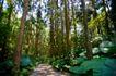 大自然环保0074,大自然环保,植物,林间 小路 石板
