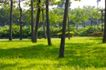 大自然环保0075,大自然环保,植物,草坪 生长 树苗