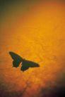 物件光影投射0057,物件光影投射,静物,蝴蝶 昆虫 纹理