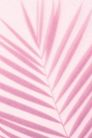 物件光影投射0070,物件光影投射,静物,粉色树枝状