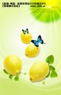 水果0012,水果,实用分层素材,水果类 新鲜柠檬 彩蝶翻飞