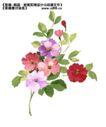 瓷器花纹0020,瓷器花纹,实用分层素材,多彩花朵