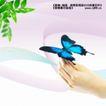 美丽0013,美丽,实用分层素材,蓝蝴蝶 落在手上