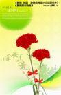 鲜花0012,鲜花,实用分层素材,红花 蝴蝶结