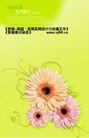 鲜花0014,鲜花,实用分层素材,春天的花朵 菊花 粉色野菊花