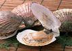 上盘海鲜0168,上盘海鲜,饮食水果,