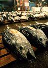上盘海鲜0197,上盘海鲜,饮食水果,大头