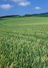 丰收写实0181,丰收写实,饮食水果,稻田 种植基地