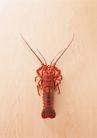 四季美食0176,四季美食,饮食水果,虾子 触角 红色