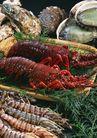 新鲜渔获0181,新鲜渔获,饮食水果,海鲜 食材