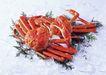 新鲜渔获0189,新鲜渔获,饮食水果,青叶