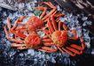 新鲜渔获0190,新鲜渔获,饮食水果,海味